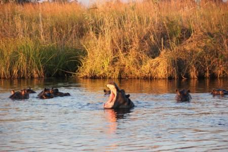 am Kwando, Zambezi