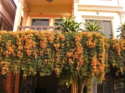 Hotel in Luang Prabang